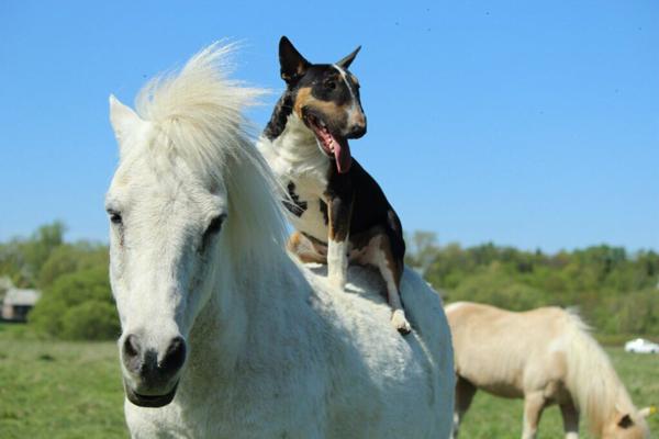 Амелькина_да, я на коне_1