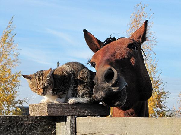 Махмудова_все любят котиков_1