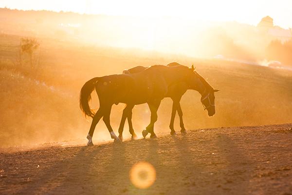 Суханова_конь о восьми ногах_1