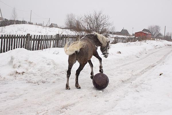 Шпаков_гоняем мячик по деревне_1